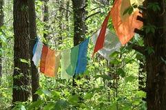 Bunte Fahnen, die in den Bäumen hängen Stockbild
