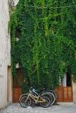 Bunte Fahrräder unter einem grünen Efeu lizenzfreie stockbilder