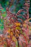 Bunte Farnniederlassung des Herbstes lizenzfreies stockbild