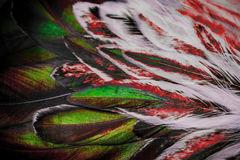 Bunte Federgruppe irgendeines Vogels Lizenzfreie Stockfotografie