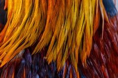 Bunte Federn, Huhn versieht Hintergrundbeschaffenheit mit Federn Lizenzfreie Stockfotos