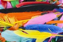 Bunte Federn Papagei färbt Entenfederbeschaffenheit Stockbilder