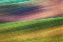 Bunte Felder am Abend in Süd-Moray Stockfoto