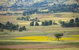 Bunte Felder in den Bergen von Äthiopien Stockfotografie