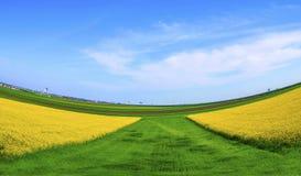 Bunte Felder im Frühjahr Stockbild