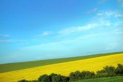 Bunte Felder im Frühjahr Lizenzfreie Stockbilder
