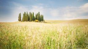 Bunte Felder mit einer Gruppe Zypressenbäumen Stockfotos