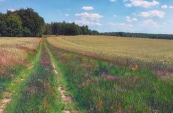 Bunte Felder und Wiesen von Nord-Polen Stockbild