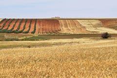 Bunte Felder von Weinbergen und von Getreide Stockbilder