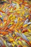 Bunte Fische Stockbilder