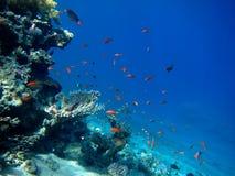 Bunte Fische Lizenzfreies Stockbild