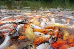 Bunte Fische Lizenzfreies Stockfoto