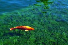 Bunte Fische Stockfoto