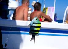 Bunte Fische auf dem Haken Lizenzfreie Stockfotos