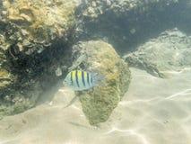 Bunte Fische auf dem Korallenriff im Oman meeres- 20 Stockbild