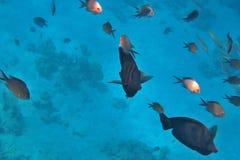 Bunte Fische im Meer Stockbilder