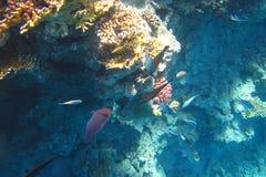 Bunte Fische im Meer Lizenzfreie Stockfotos