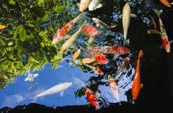 Bunte Fische mit Himmel und grüner Reflexion Stockbilder