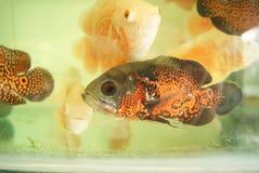Bunte Fische sind lizenzfreie stockfotos