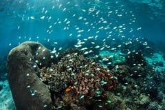 Bunte Fische und Coral Reef Stockfotos