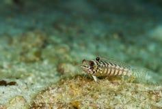 Bunte Fische Unterwasser in Malediven Lizenzfreie Stockbilder