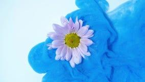 Bunte Fl?sse der blauen Tinte auf eine rosa Blume im Wasser stock video