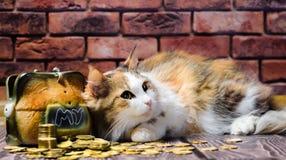 Bunte flaumige Katze der Habsucht, die einen Berg von Münzen und von Sparschwein schützt stockbilder