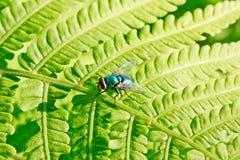 Bunte Fliege auf grünem Blatt Lizenzfreies Stockbild