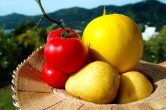 Bunte Früchte in der Landschutzkappe Stockfoto