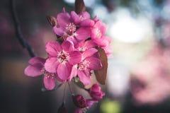 Bunte Frühjahrblumen Stockbild