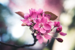 Bunte Frühjahrblumen Stockfoto