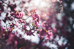 Bunte Frühjahrblumen Lizenzfreie Stockfotos