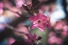 Bunte Frühjahrblumen Lizenzfreie Stockbilder