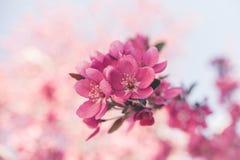 Bunte Frühjahrblumen Stockbilder