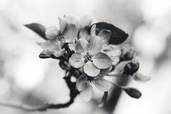Bunte Frühjahrblumen Lizenzfreies Stockbild