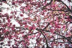 Bunte Frühjahrblumen Lizenzfreie Stockfotografie