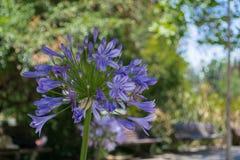 Bunte Frühlings-Blumen stockbilder