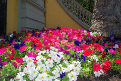 Bunte Frühlings-Blumen stockfoto