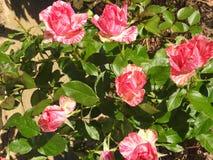 Bunte Frühlingsblumen in der Wiese an einem klaren Sommertag lizenzfreies stockfoto