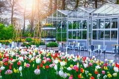Bunte frische Tulpen und Frühlingsblumen in Keukenhof arbeiten, die Niederlande im Garten Lizenzfreie Stockfotos