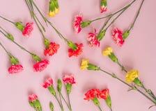 Bunte Gartennelkenblumen auf hellrosa Hintergrund Flache Lage, Draufsicht stockfotos