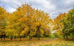 Bunte Gasse mit gelb gefärbten Ahornbäumen und grünen Kastanien, grüner Rasen und Bahn umfasst mit Herbstlaub und stumpfem Himmel Stockfoto