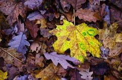 Bunte gefallene Blätter Stockfotos
