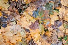 Bunte gefallene Blätter gelegt auf kalten Boden Stockbilder