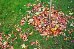 bunte gefallene Blätter im Herbst Stockfotos
