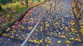 Bunte gefallene Blätter unter erstem Schnee auf Asphaltweg im Herbst Lizenzfreie Stockfotografie