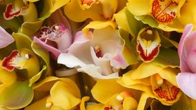 Bunte gelbe Orchideenblumen auf Ausstellung im Gewächshaus stock footage