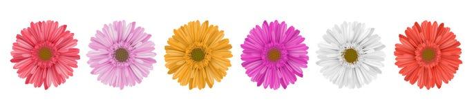 Bunte Gerberagänseblümchen-Blumenreihe für Fahne Stockbilder