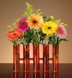 Bunte gerbs im orange Vase auf bernsteinfarbigem Hintergrund mit grüner Weide Lizenzfreies Stockfoto