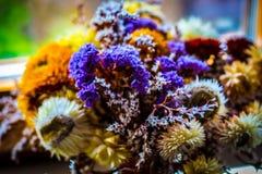 Bunte getrocknete Blumen Stockfoto